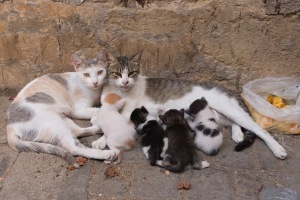 600px-feral-cats-and-kittens (1)